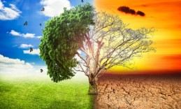 global-warming-climate-change-tree_1big_stock2-620x413