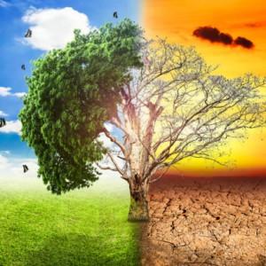 global-warming-climate-change-tree_1big_stock2-620x413 - Copy